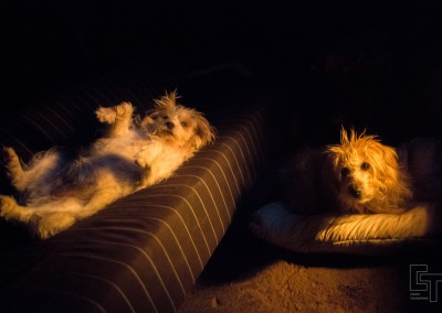 The boys fully living it up by firelight